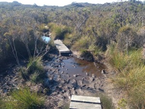 Boardwalks provide a safe and fast way to get between Tasmania's muddy pools