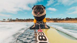 go-pro-surfing-15th-street-1438074006480